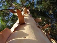 1800 hectares de eucalipto urograndis a venda...