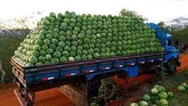 melancia campinas carga fechada 15 toneladas