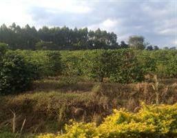 Sítio Produtivo de Café no Norte do Paraná