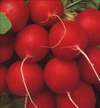 Sementes de Rabanete Vip Crimson Seleção Especial Lata com 100g - Feltrin