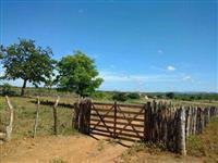 Fazenda a venda em Serra Talhada – PE ,214 hectares