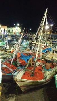 Pescado selecionado de Belém