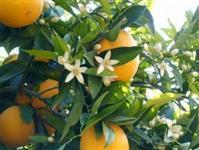 Superthrive - Super Vitaminas Para Plantas**original**