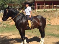 Cavalo crioulo oportunidade