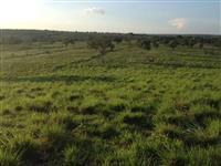 Fazenda a venda no Tocantins, 1.263 hectares