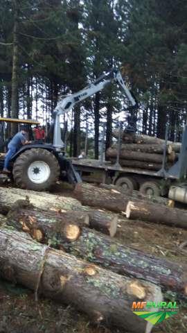 Serviços Florestal - Carregamento e transportes.