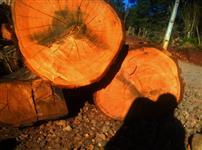 Vendo madeira de eucalipto saligna vermelho e outross