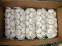 Alho branco grade A importado da China calibres 5, 5.5 e 6