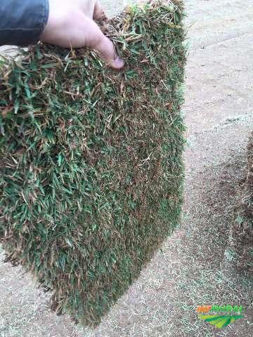 Gramas Esmeralda, São Carlos e Batatais para jardins