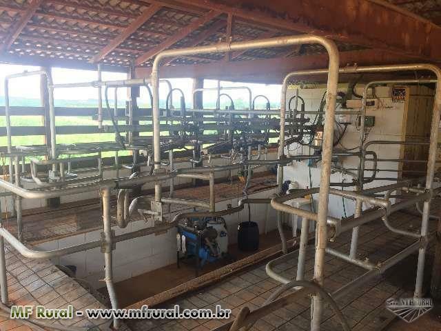 Ordenha Canalizada Gea Farm com 4 Conjuntos