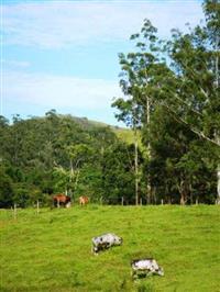 Fazenda Barra Mansa, Rio Preto, MG