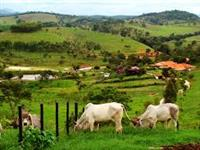 Prestação de Serviços agrícolas,