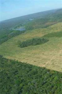 Fazenda 13600ha pode