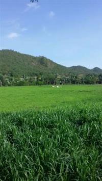 Oportunidade Impar Fazenda 200alq para Boi -Tocantins