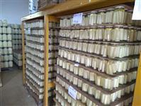 Indústria de palmitos com em funcionamento com todas as licenças e faturamento