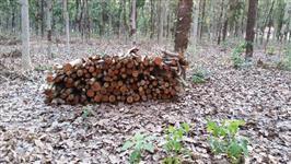 Madeira de mogno africano de reflorestamento