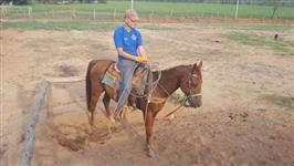 Cavalo Pronto no laço cabeça