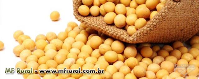 Comercializo SOJA GMO - solicite uma cotação
