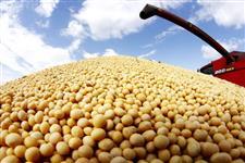 SOJA GMO PARA