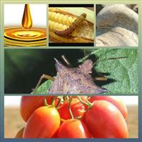 Óleo de neem puro 100% Natural com 2000 PPM Azadiractina