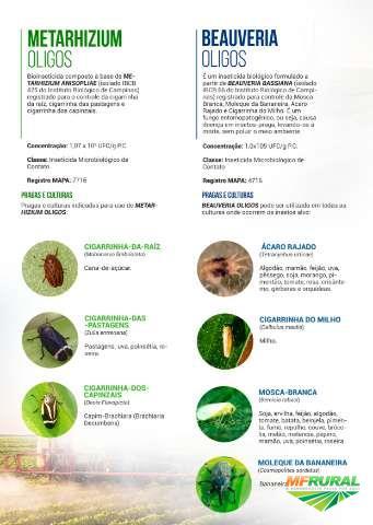 BEAUVERIA  OLIGOS WP - Defensivo Agrícola Biológico