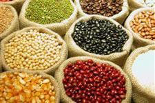 Café, Soja, Ovos e Castanha de Caju para Oriente Médio