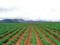 fazenda em cana de açucar