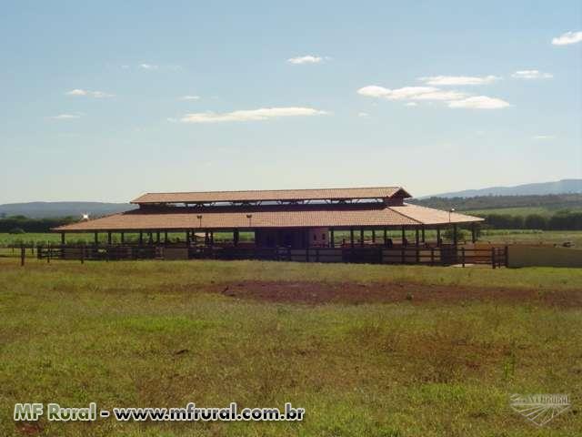 Vendo Fazenda 1200ha Norte de Minas - Estrada BH - Montes Claros