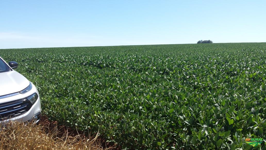 Fazenda 130 hectares