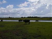 Vende-se fazendas em Cajari - Maranhão