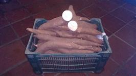 Mandioca mansa - Lote com 50, 100 a 500 caixas