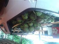 Vendo coco