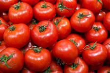 Temos Tomate e Cebola direto do Produtor.