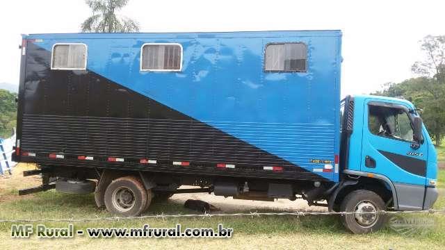Transporte de Equinos Compartilhados ou Não