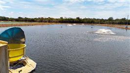 Projeto e implantação de piscicultura