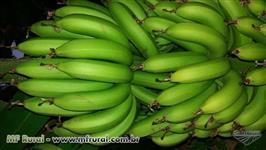 Fazenda de banana