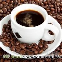 EXPORTAÇAO DE ALIMENTO CAFE