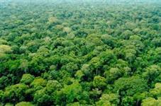 RESERVA LEGAL NO AMAZONAS  COM ICMBIO AREA DE 130,000 HECTARES OPORTUNIDADE UNI