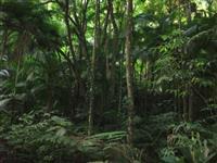 Creditos de reposição florestal