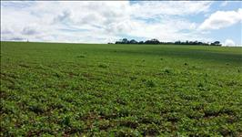 FAZENDA A VENDA - 500 hectares - ESTRELA DO INDAIÁ (MG)