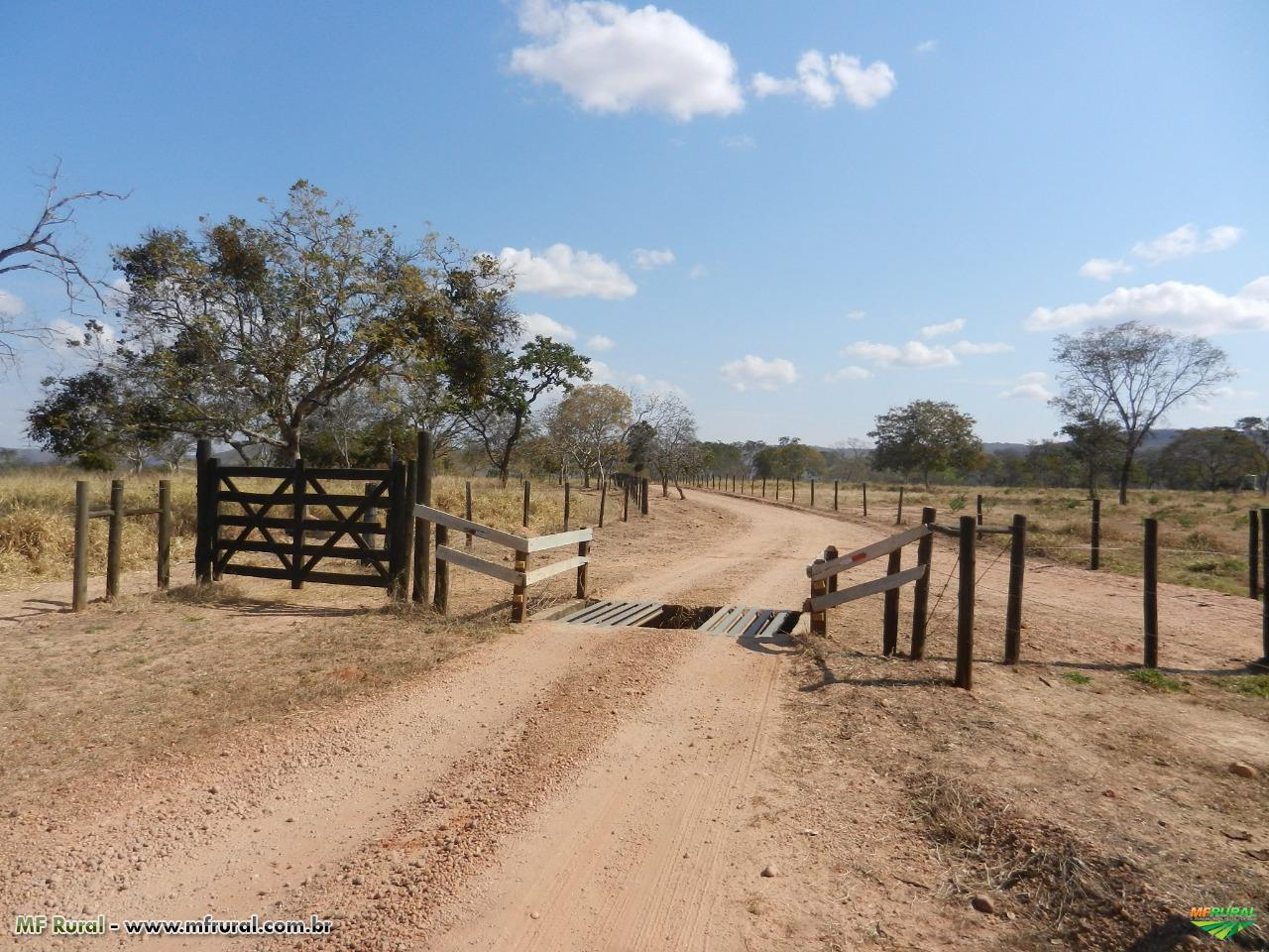 FAZENDA – 332 hectares - VÁRZEA DA PALMA (MG)