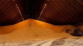 Vendo soja GMO para mercado interno e exportação