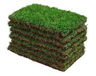 Grama e mão de obra . Fornecemos e formamos gramados  para , jardim , campos , condomínio ...