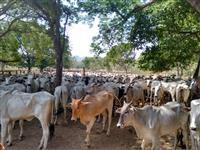 Fazenda Município de Niquelândia - GO
