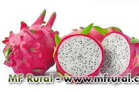 Sementes frutas raras
