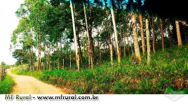 Terreno 6.000m2 com plantação
