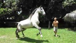 Égua Lusitana