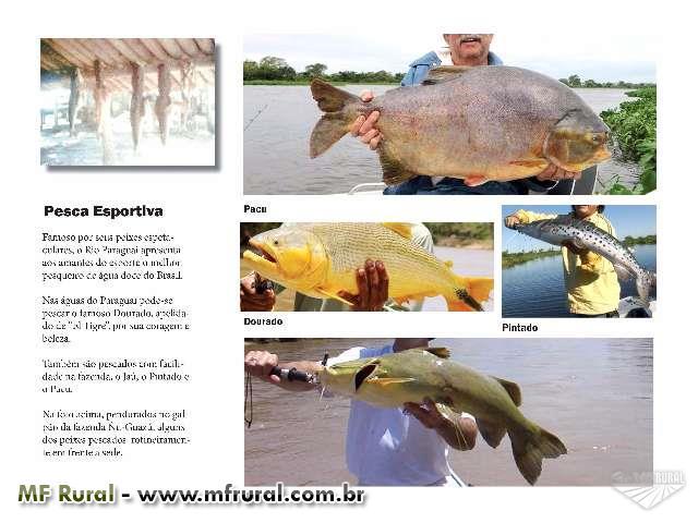 Vende-se Fazenda no Pantanal – Pecuária Orgânica e Ecoturismo
