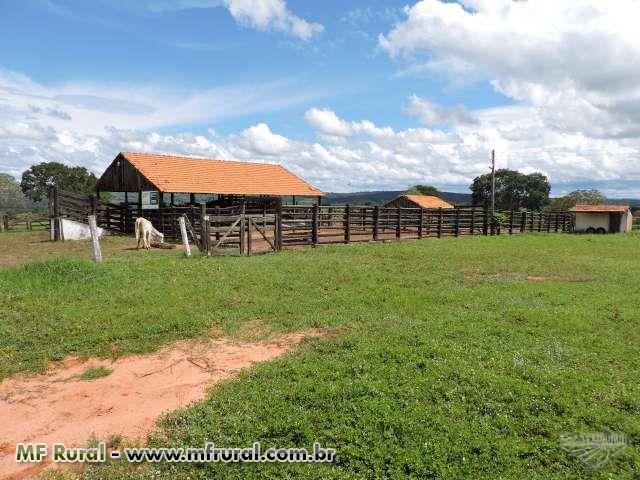 Fazenda Funil - Buritinópolis