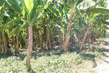 Lote agrícola Projeto Formoso